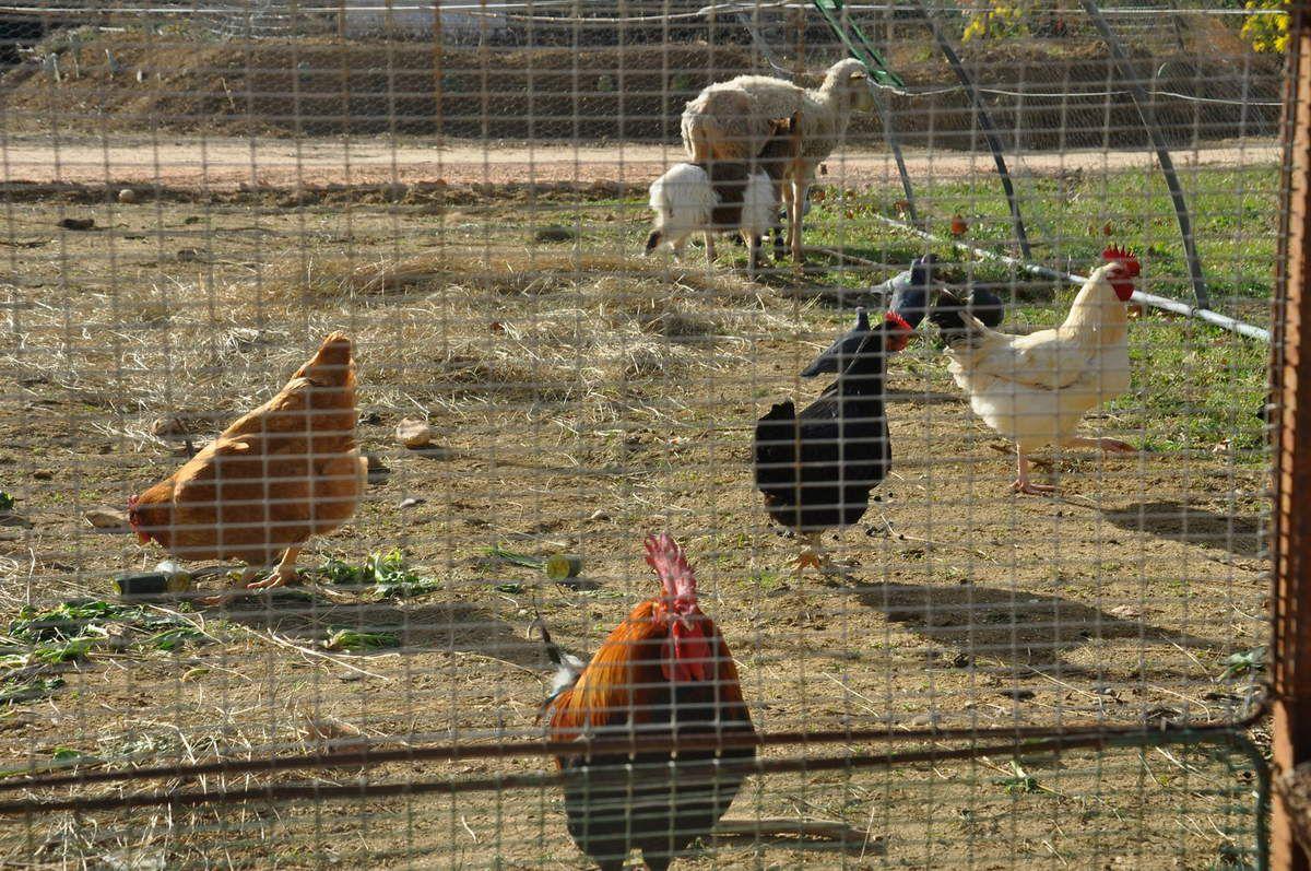 Une nouveauté une petite ferme vivante pour le plaisir des enfants.