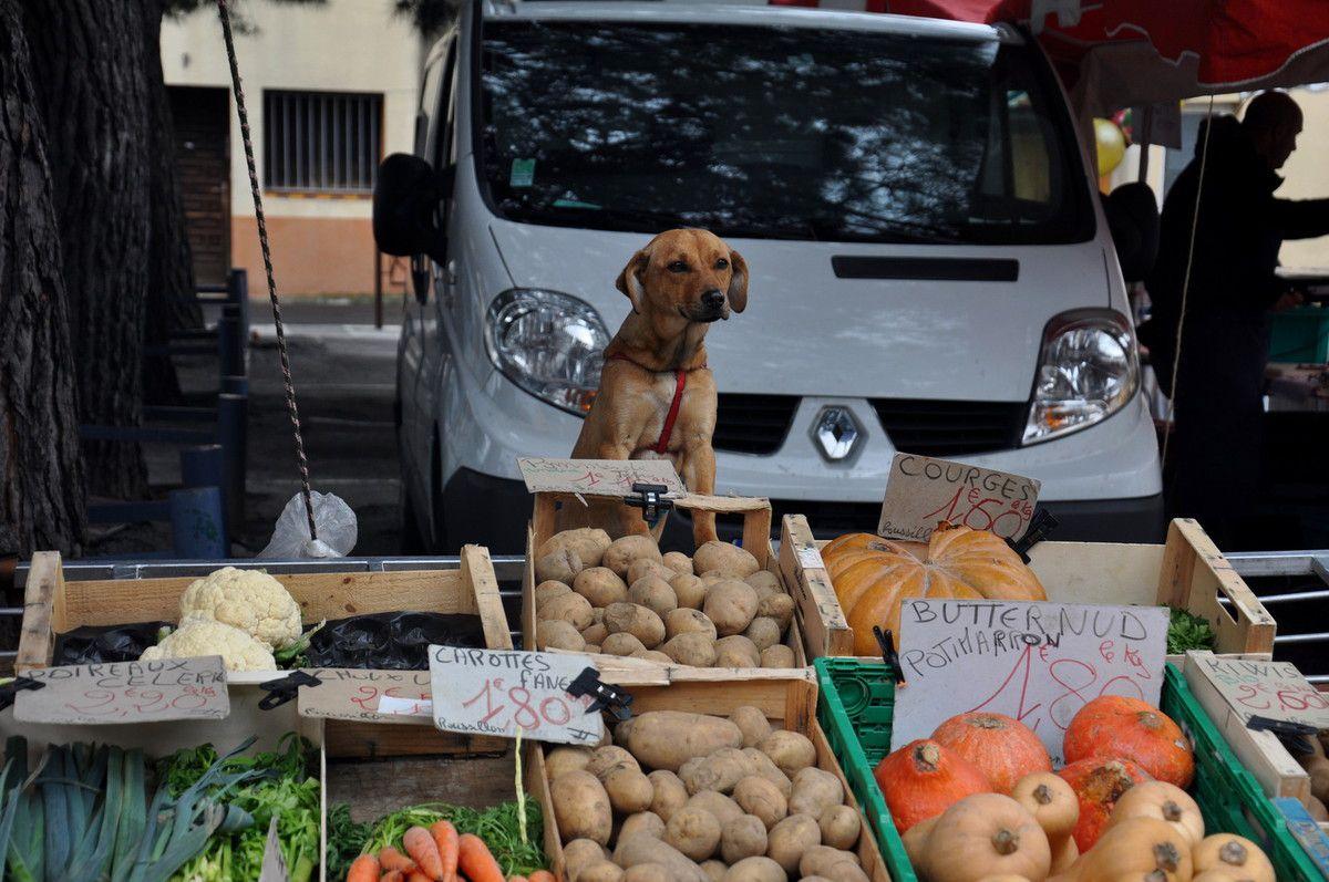 6ème fête du cochon au Soler en 45 photos