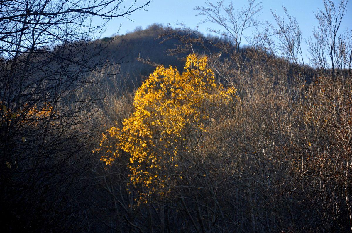 Je passe au jaune, quelques feuilles en mi-décembre 2016