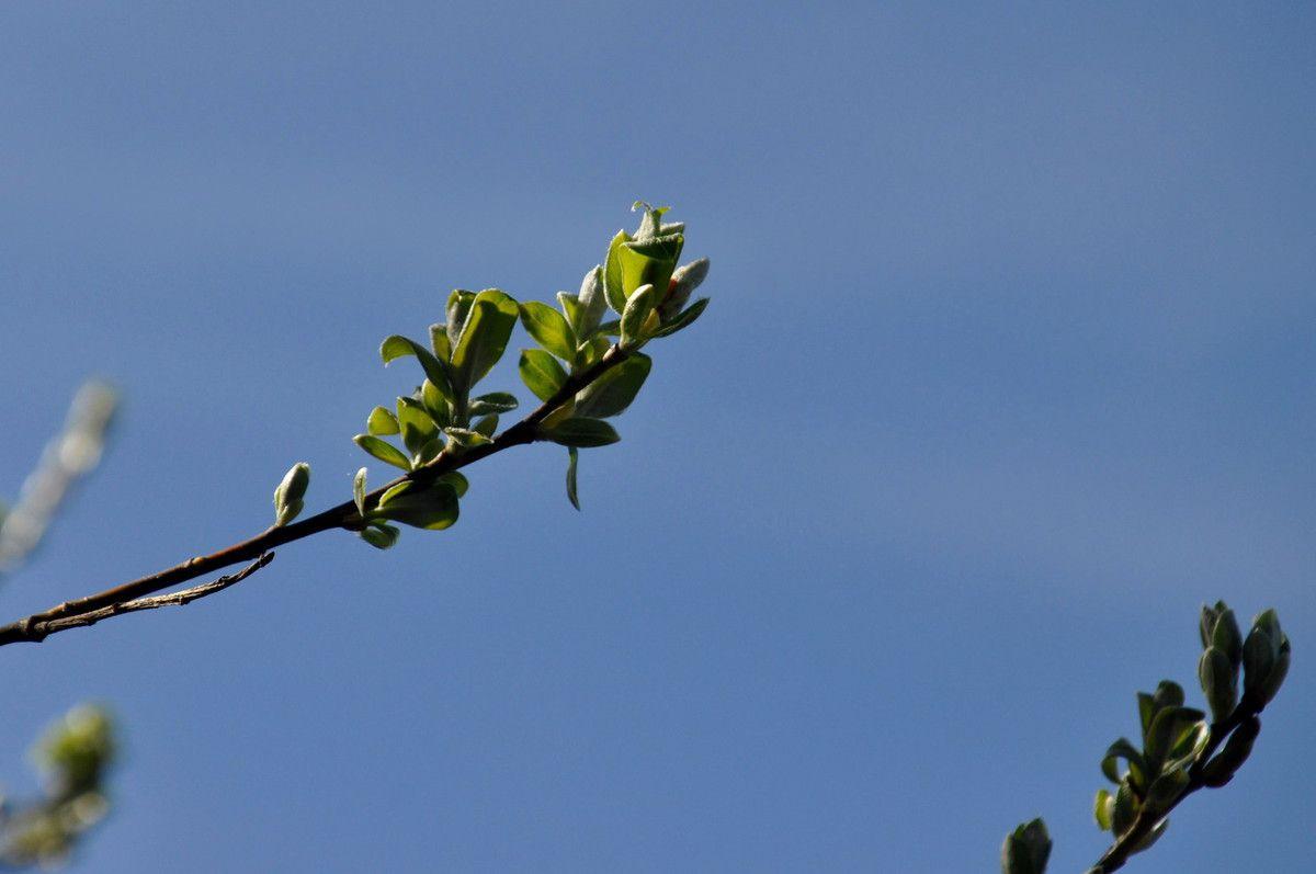 C'est le printemps.