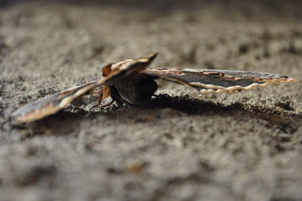 D'en bas le vent soulève les ailes du papillon.