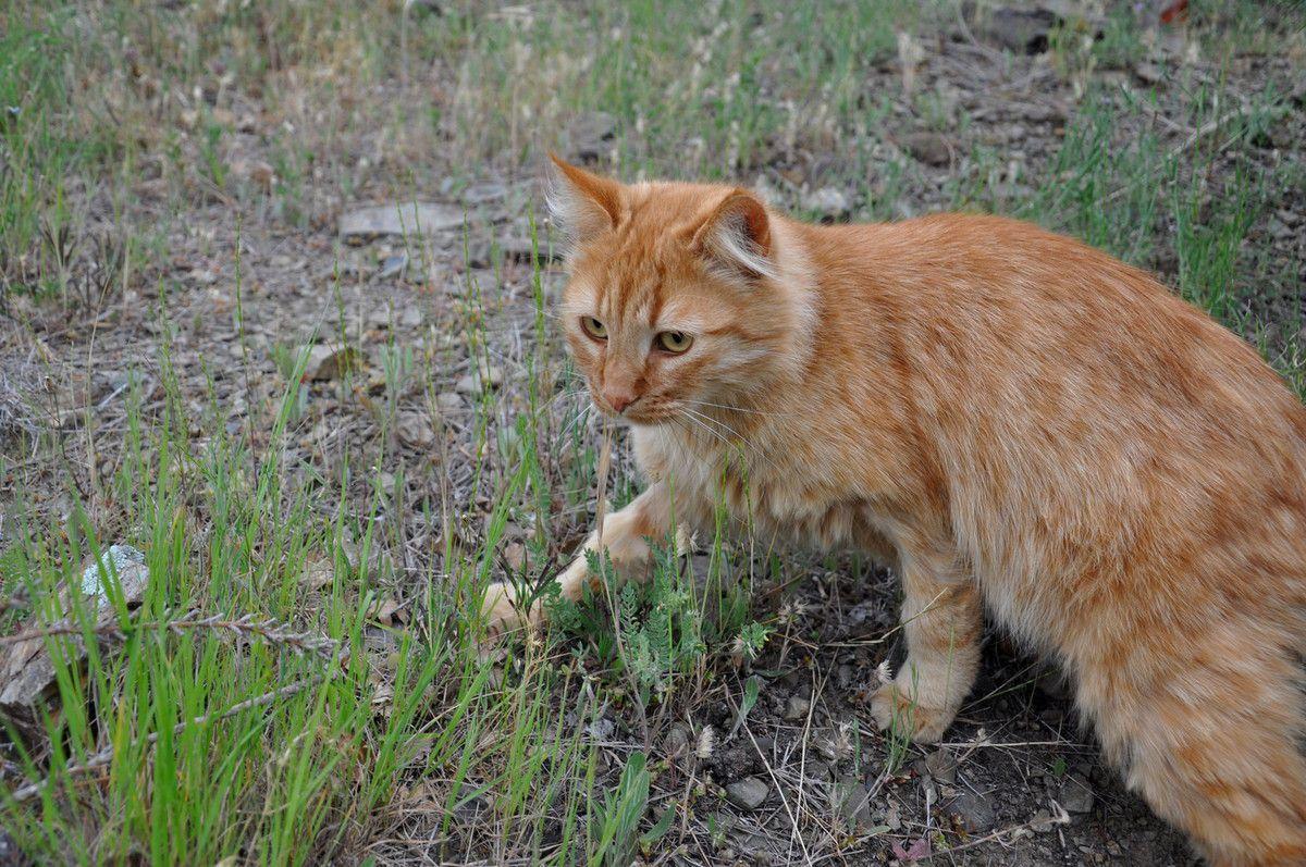 Plus de criquet, chat arrive, chat rate aussi pour l'apéritif, cela tombe bien, car la pluie serait venu gâcher le festin.