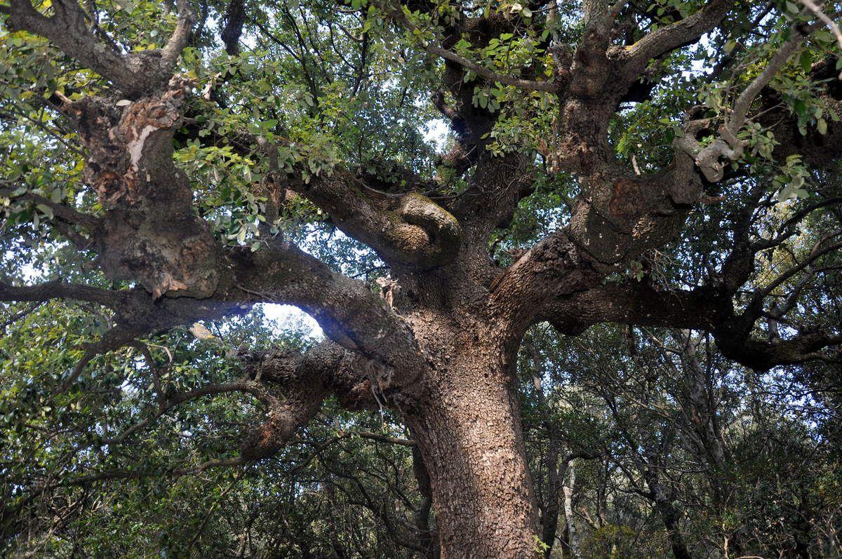 Un très bel arbre, mais pas facile avec la lumière.