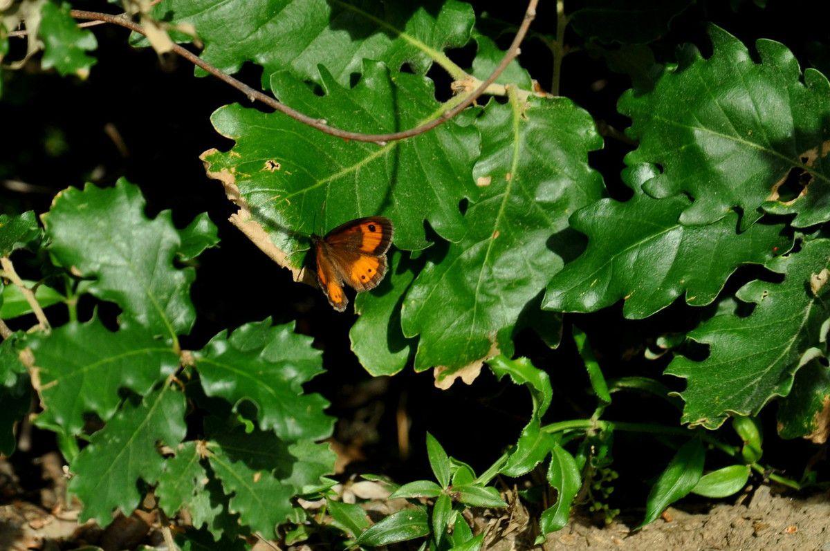 Le papillon et l'ombre sur la feuille.