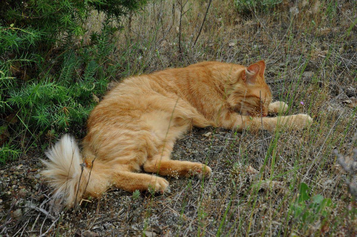 Souple comme chat, moi pas de problème de muscle, d'articulation, ni de stress !