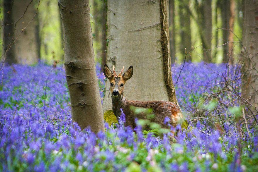forêt mystérieuse en Belgique !