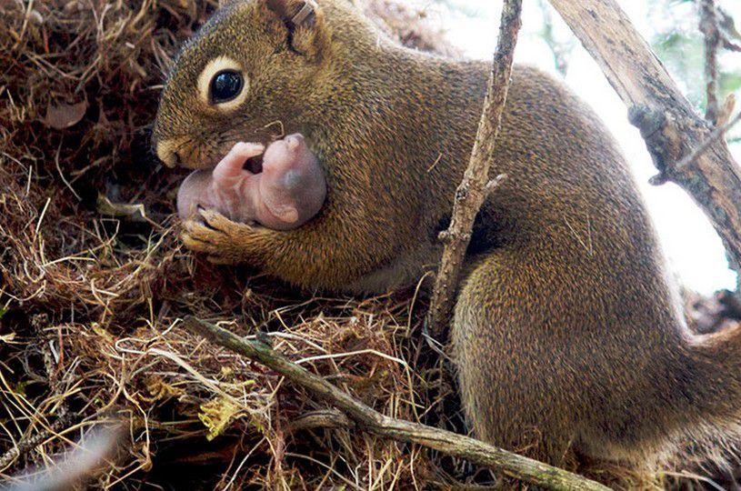 maman et bébé - ou tendresse des animaux