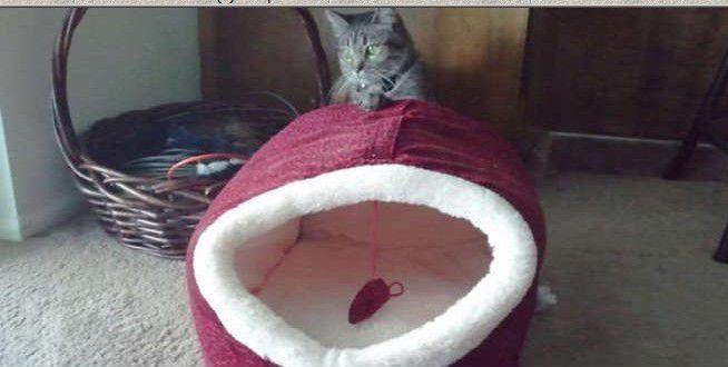 voilà bien des chats illogiques .....