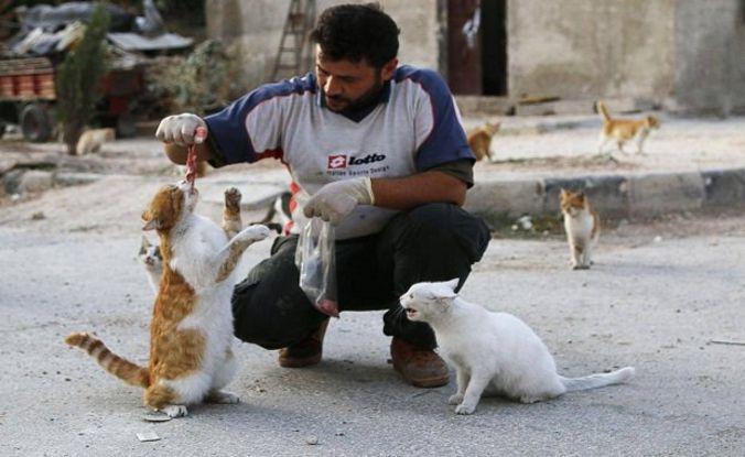 les chats d'Alep en Syrie !!!!