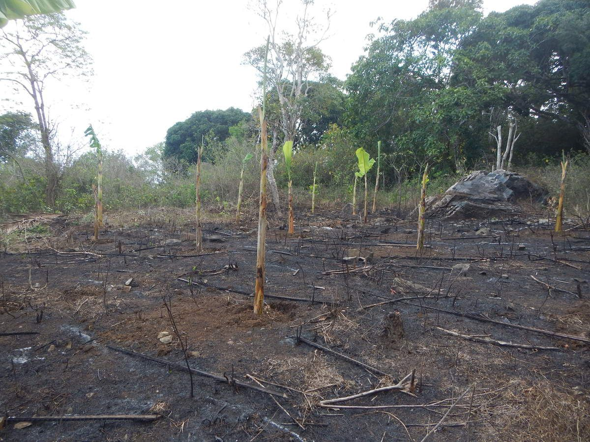 La déforestation à Mayotte.