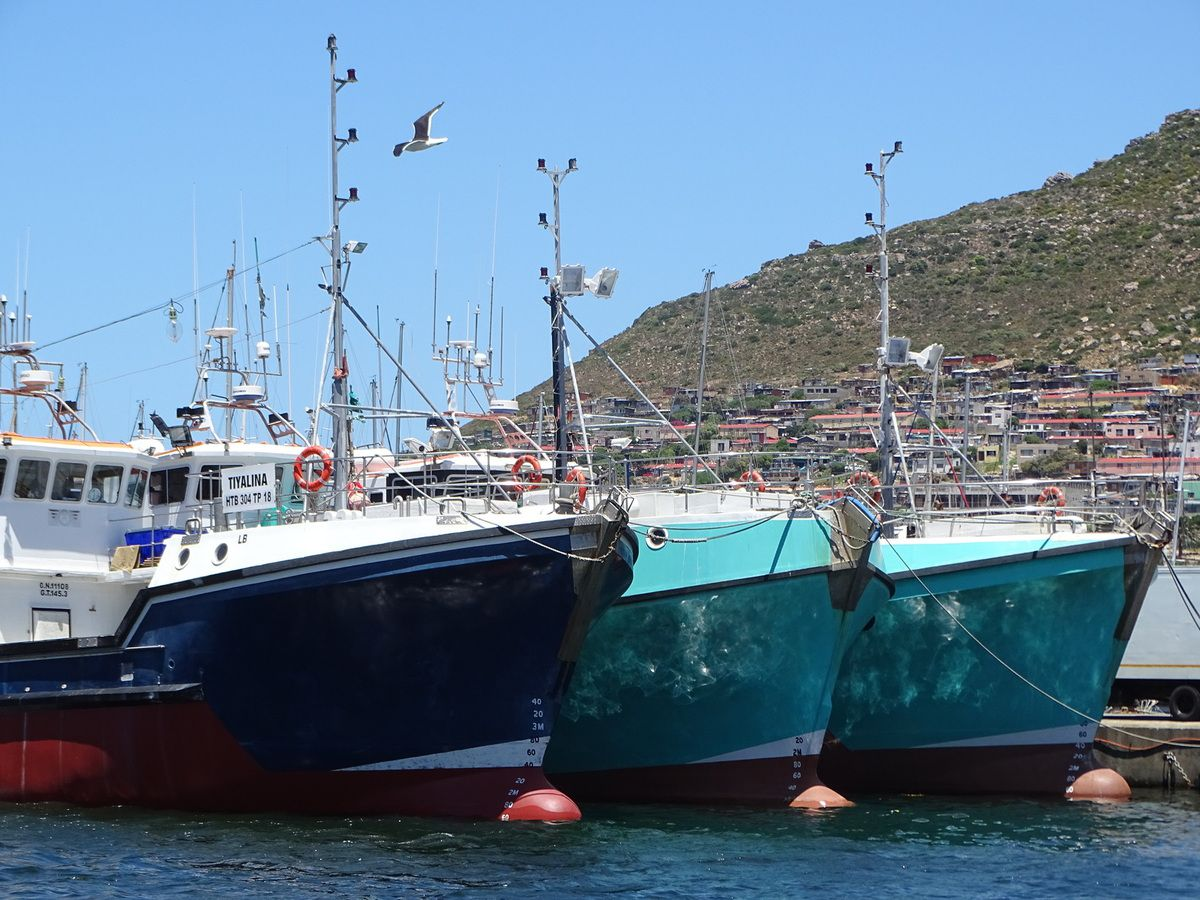 Le port de Hout Bay