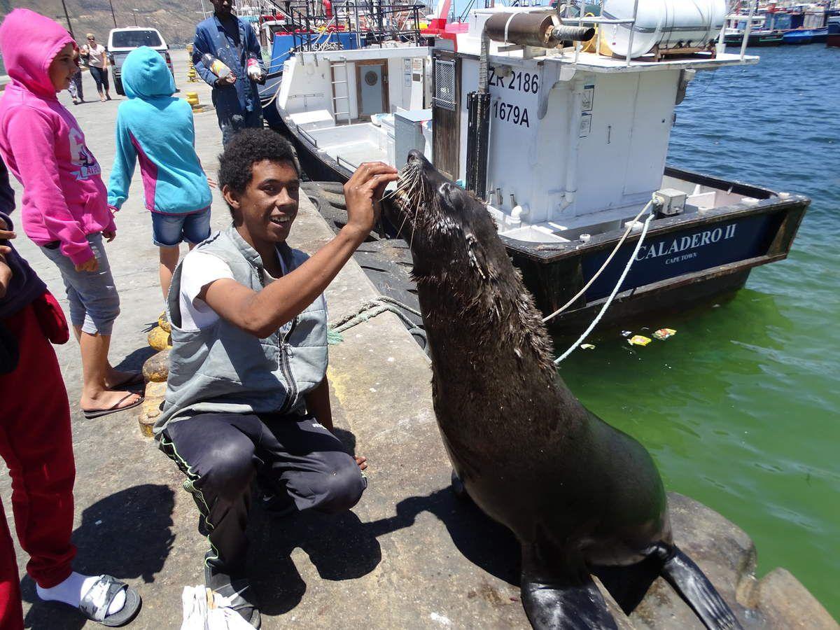 Les otaries qui viennent dans le port se faire nourrir et amuser les touristes.