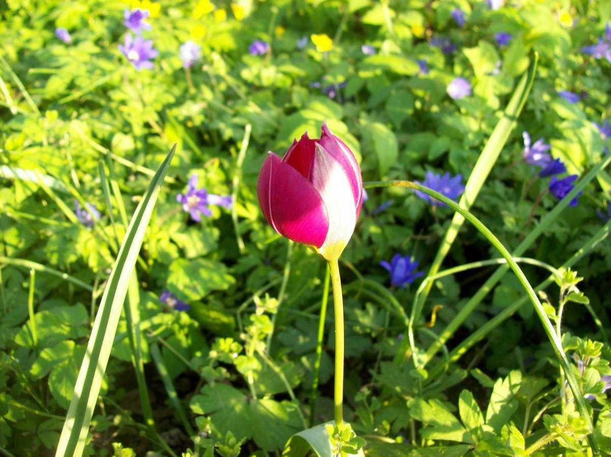 Blühende Frühlingsgrüße