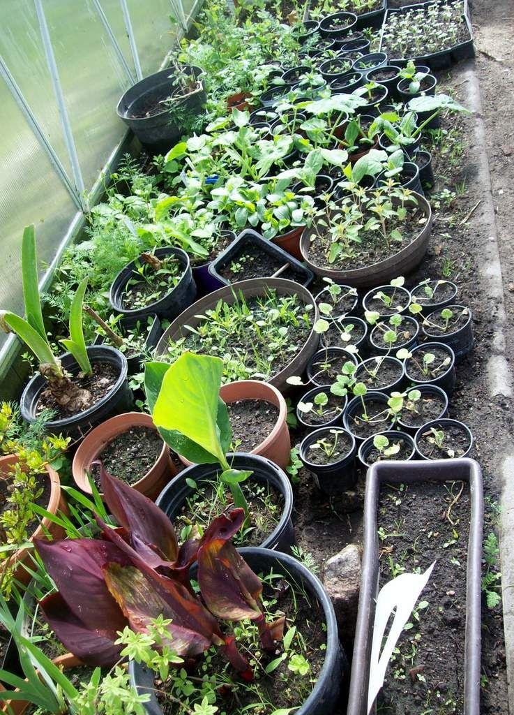 Gemüse- und Blumenpflanzen abzugeben