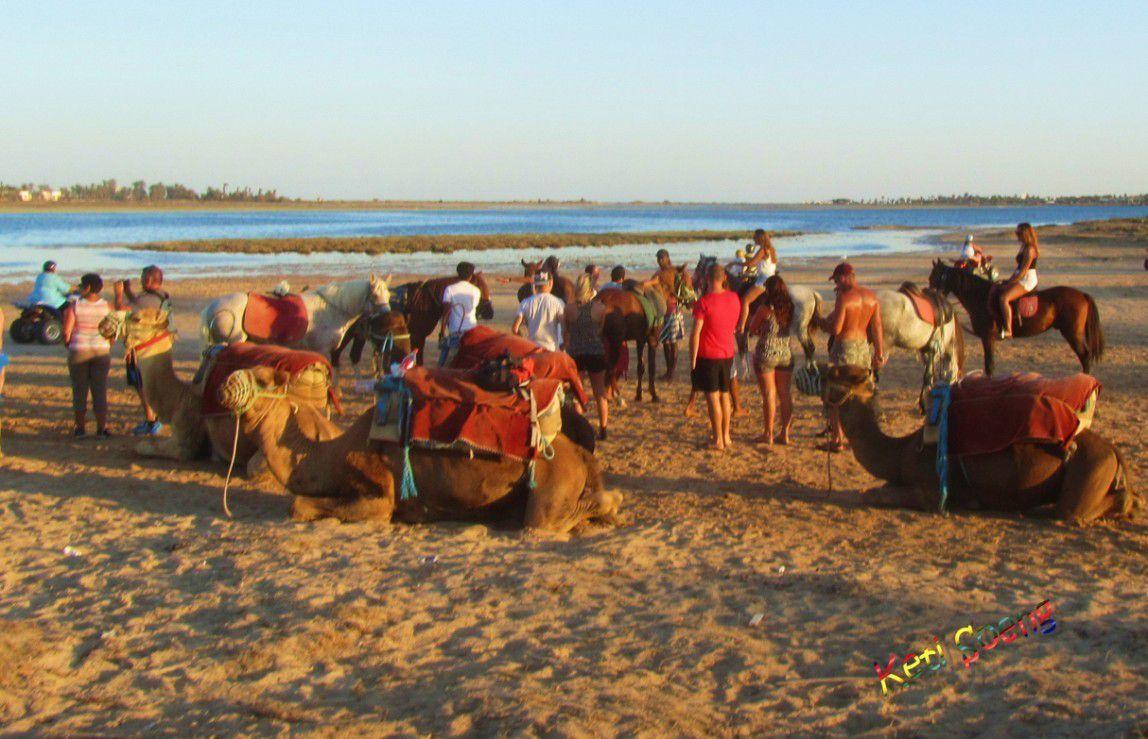 Animación y descanso en  las playas de la isla de Djerba y paseos a caballo o en dromedario por  el lago salado.