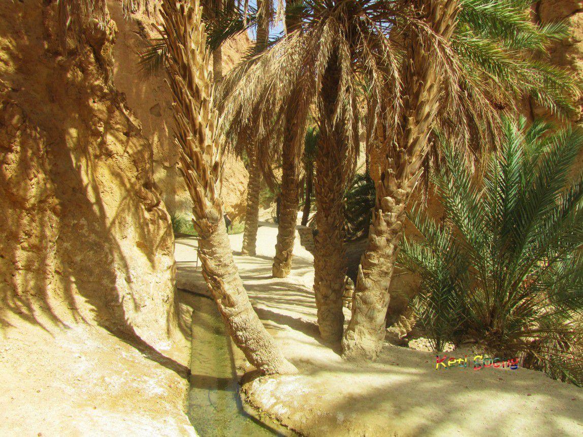Cañón de Midés, Oasis de montaña de Tamerza y Chebika, lago salado Chott El Djerid y parte de desierto que fue escenario de La Guerra de las Galaxias.