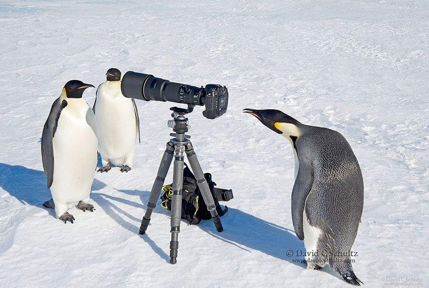LES NOUVEAUX PHOTOGRAPHES