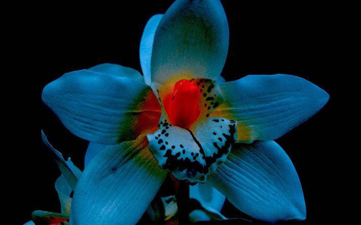wallpaper,orchidée,fleur,flowers,beauté,nature,fond d'écran