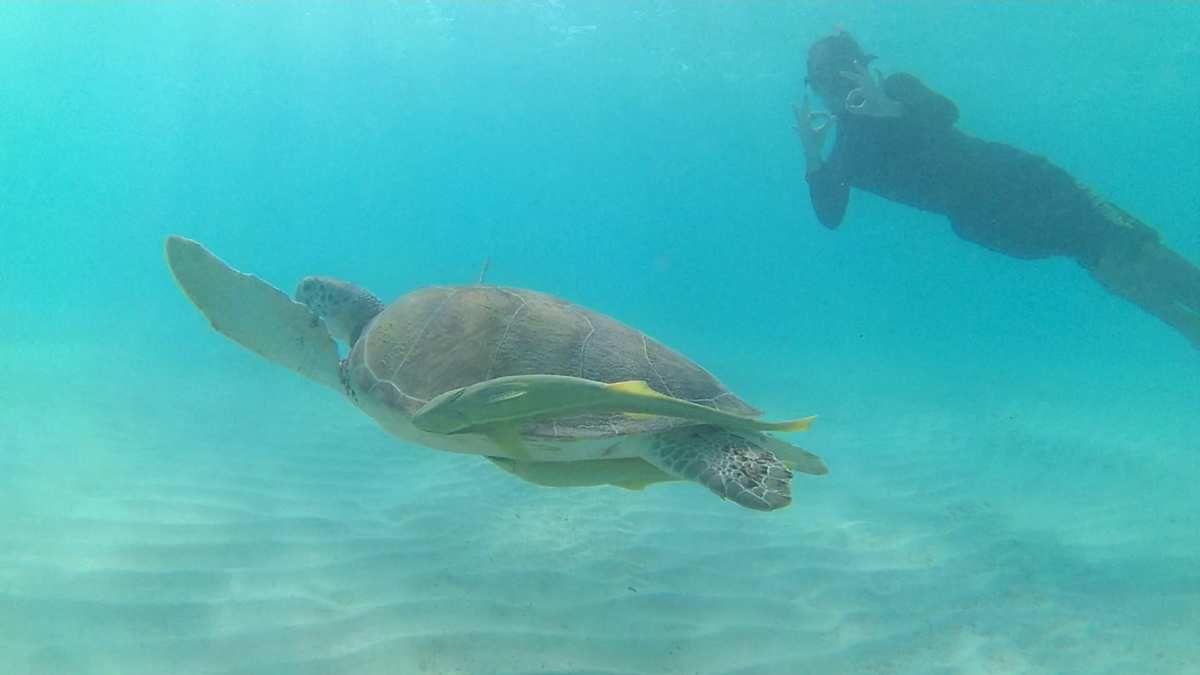 Nager avec les Turtles de Akumal !!