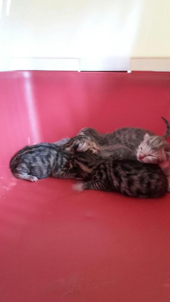 Comment peut-on  tuer ces pauvres choux? Et pourquoi? la mère est une très belle chatte tigrée clair croisée angora.