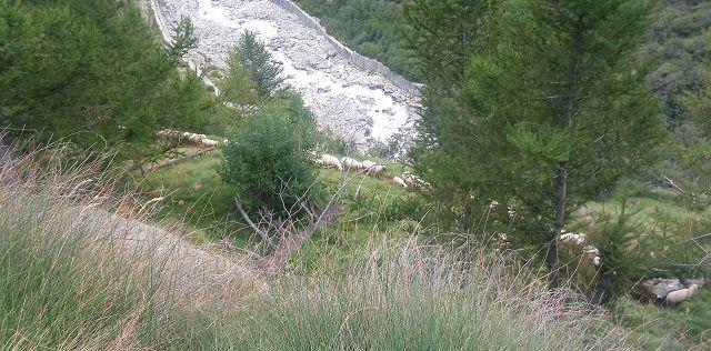 Dal Belvedere di Macugnaga a Pecetto per il sentiero naturalistico (ghiacciaio, Alpe Fillar, Roffelstaffel) - Con immagini del percorso