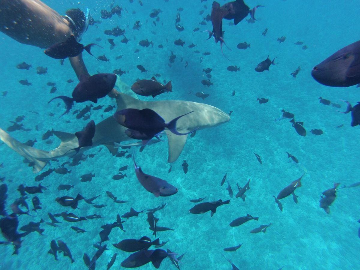 Ce que j'ai aimé en Polynésie