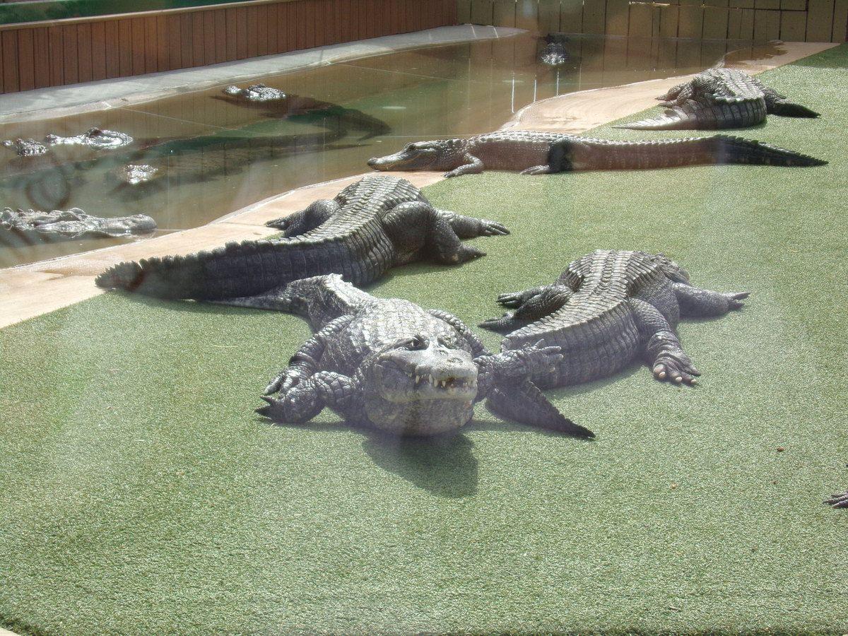 Garden Reptile