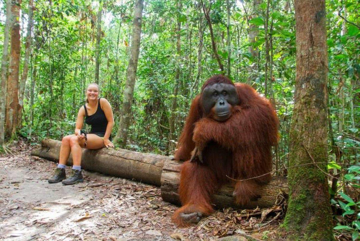 Nos amis, les animaux(quand ils font semblant d'être bête) - Page 10 Ob_0f9e3c_galerie-images-droles-insolites-et-s