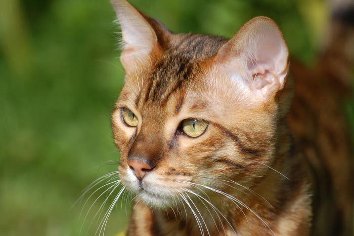 Mon Chien , Mon Chat ,Je l'aime , Je l'assure.