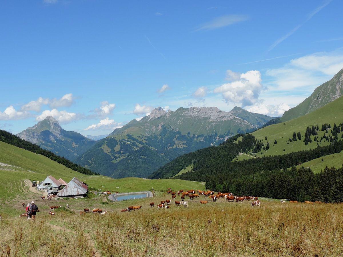 Randonnée à la Dent d'Arclusaz (2041m) le 8 août 2014 avec l'ADAPAR
