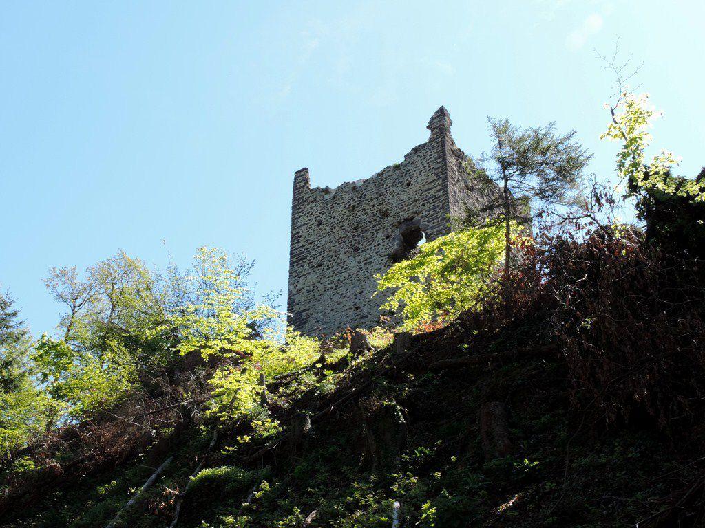 Tour de 25 m de haut à l'extrémité du site et aspérule odorante
