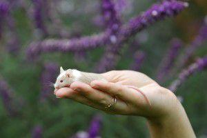 Utilisons des cosmétiques non testés sur les animaux