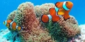 Catalogue de la vie marine