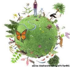 Biodiversité : des chartes pour protéger trois parcs nationaux en France