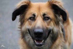 Refuge ARPA (refuge de chiens) en danger : appel à dons et à adoption svp !