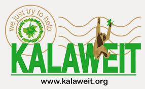 Association Kalaweit : une passion nommée Gibbon