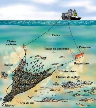 Non au pillage en eaux profondes !