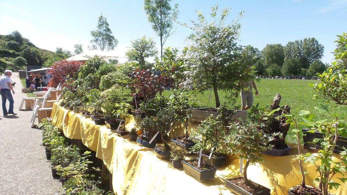 Castelnau d 39 estretefonds journee autour du jardin 10 mai for Jardin mai 2015
