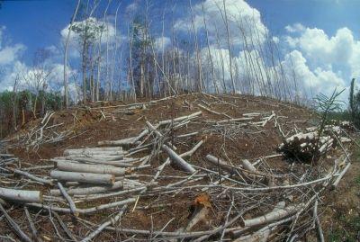 Déforestation pour les bois tropicaux