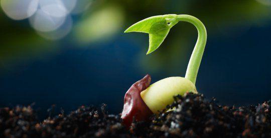 Biopiraterie en France: comment des entreprises menacent de s'approprier des semences et des plantes