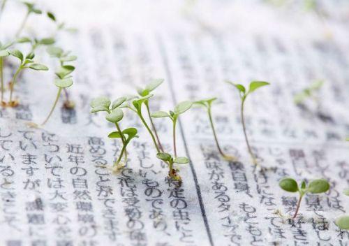 Au Japon, un quotidien commence une nouvelle vie... une fois planté en terre.