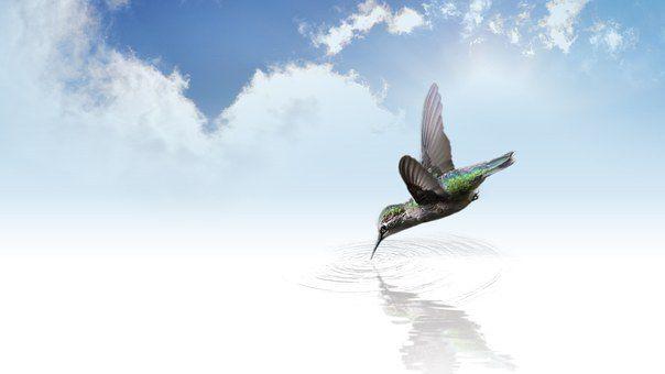 Image : pixabay.com/fr/photos/colibri/