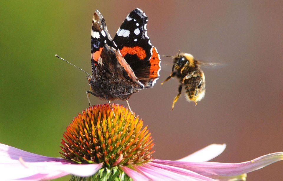 Allemagne: Plus de 75% des insectes ont disparu depuis 1989