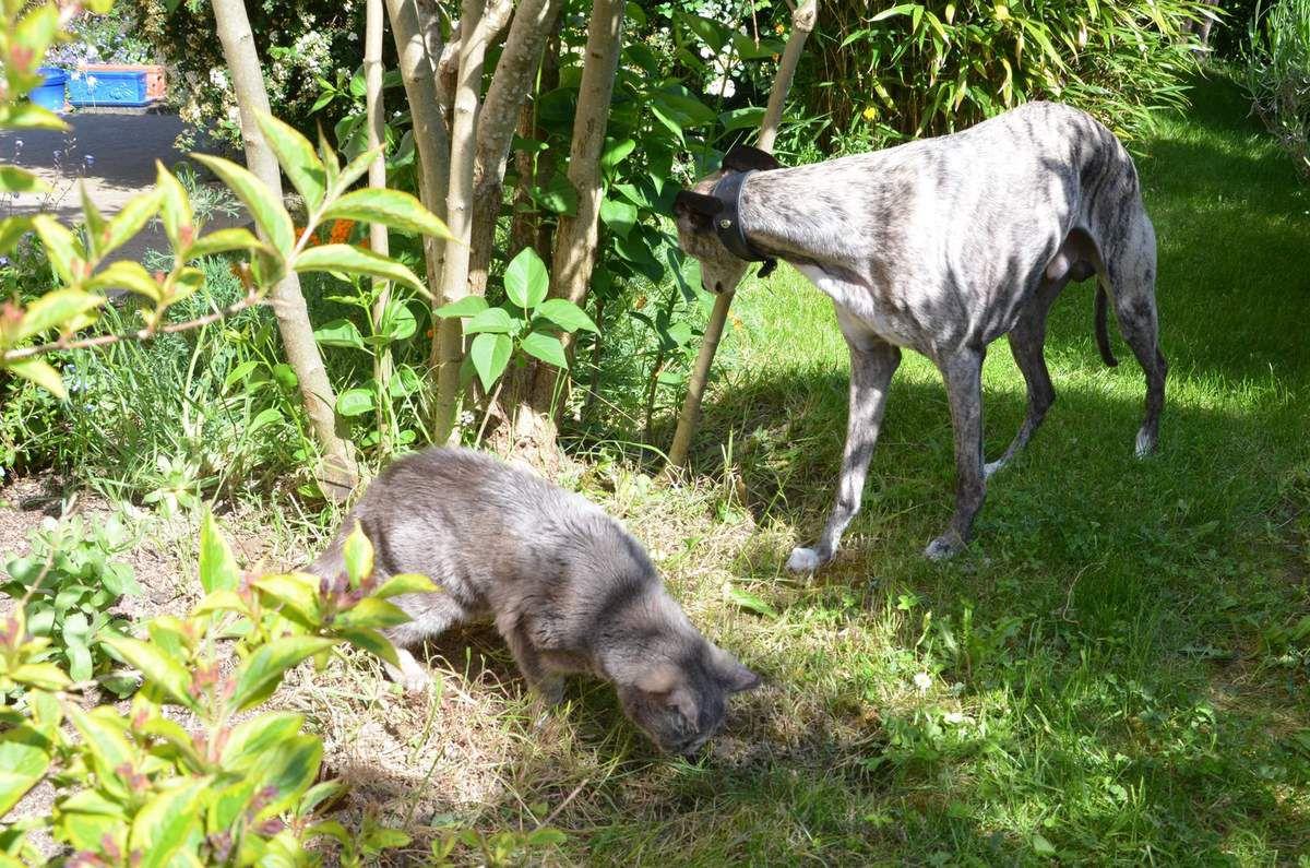 Mai 2015 - Inspection au jardin