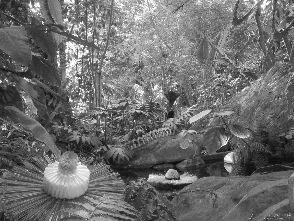 Grandes serres du jardin des plantes les yeux de clem for Animalerie du jardin des plantes