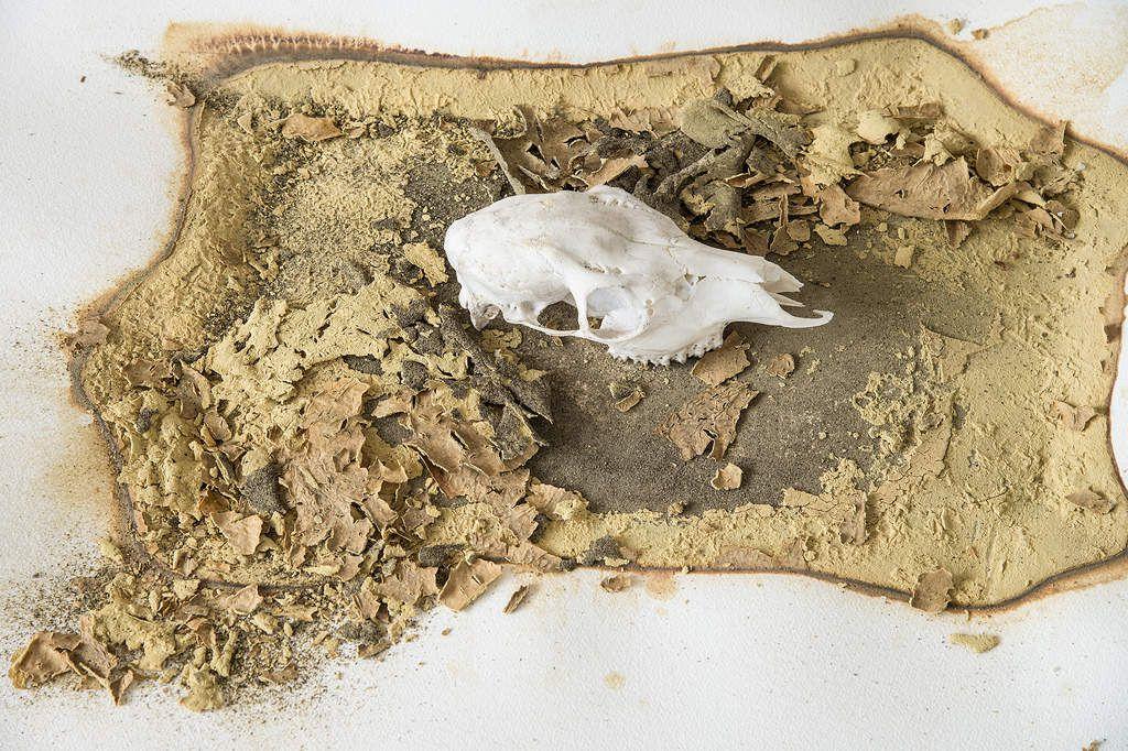 une fois la matière dissoute, coagulée de façon subtile en une autre forme, elle prend un autre aspect et reste un organisme vivant.