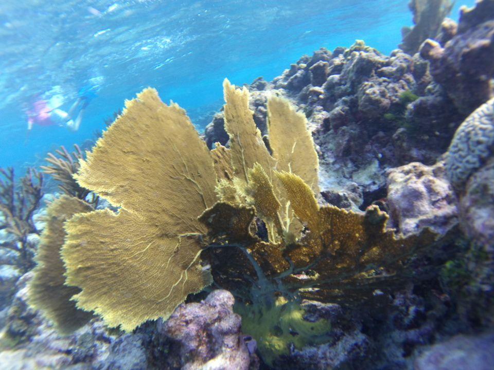 En bonus, la vie sous marine des Grenadines !