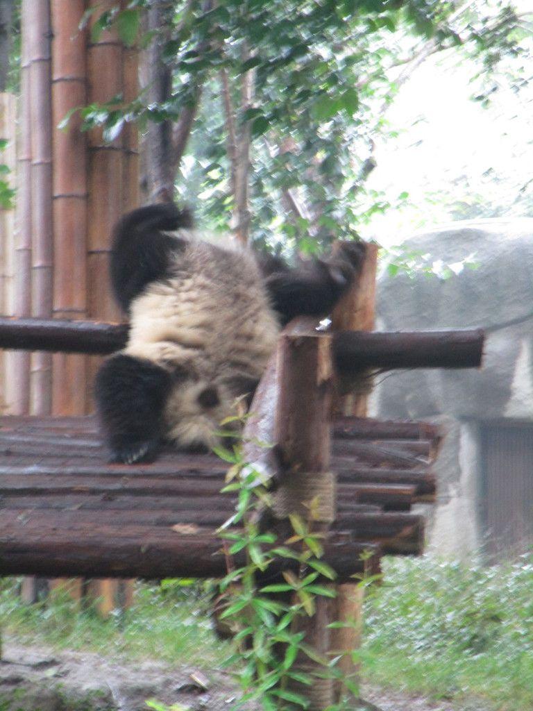 je fais le singe ... regardez moi jai la tete en bas !
