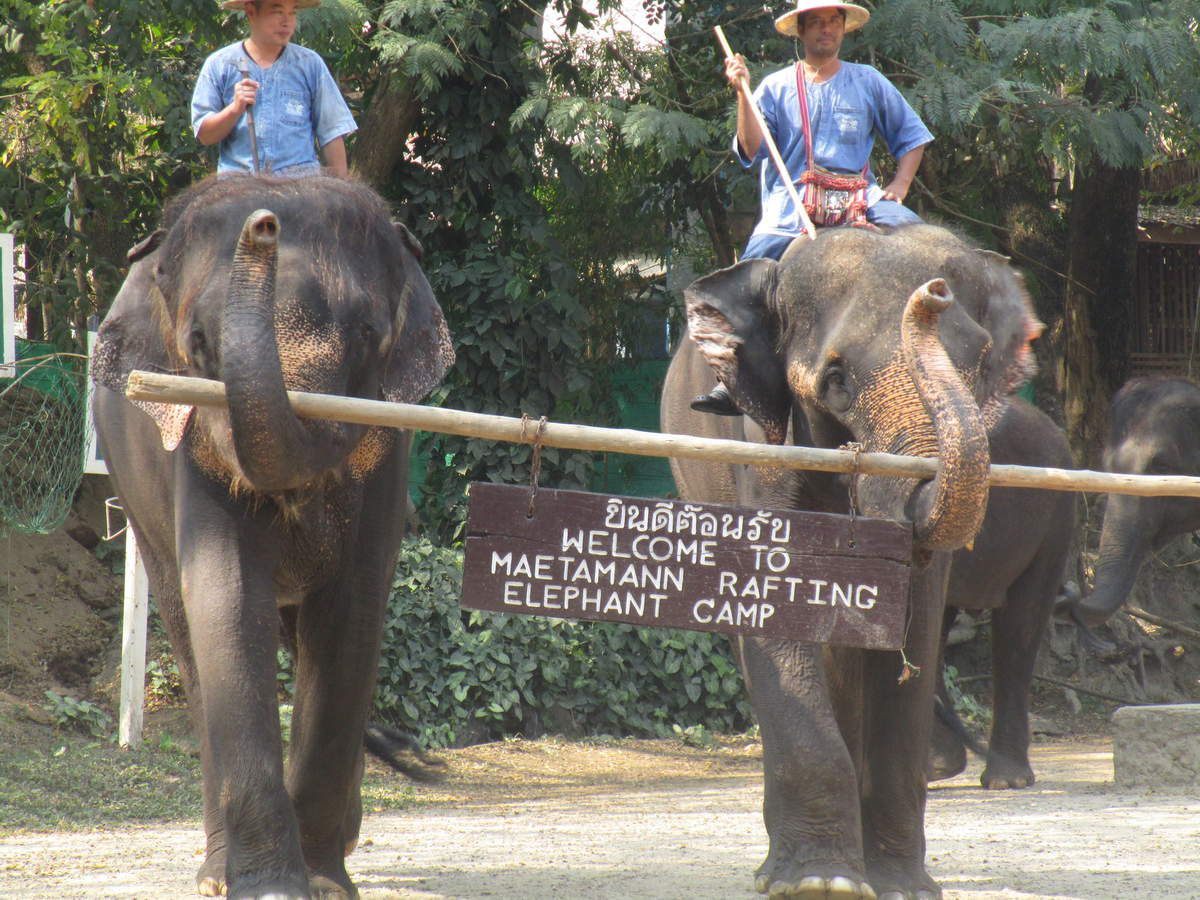 debut spectacle des elephants