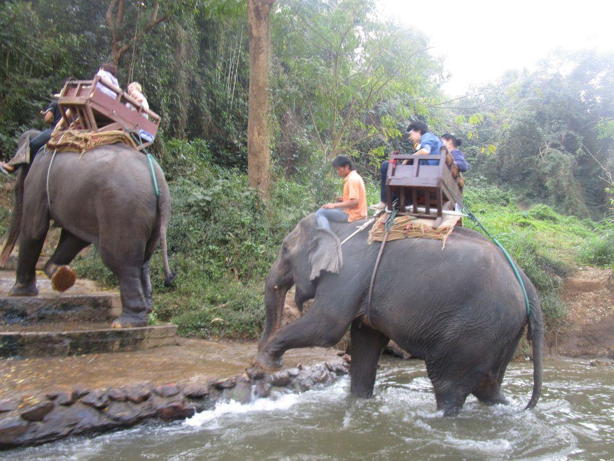 les elephants en balade